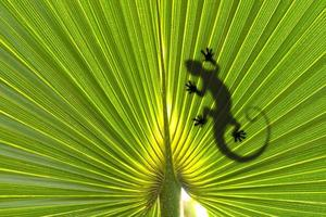 lagarto na folha