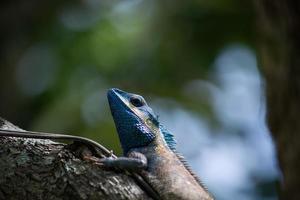 lagartixa colorida na árvore. foto