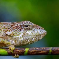 Madagáscar foto