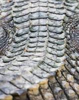 pele de crocodilo foto