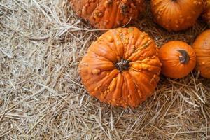 canteiro de abóbora em um campo de palha. plano de fundo para o outono foto