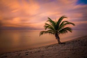 palmeira pôr do sol