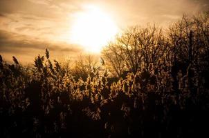 pôr do sol com arbusto