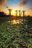 lagoa de baobá ao pôr do sol