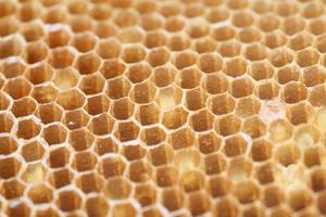 textura de favo de mel como pano de fundo. foto
