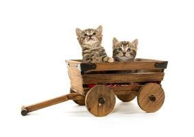 dois gatinhos fofos em branco foto