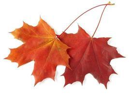 duas folhas de bordo foto