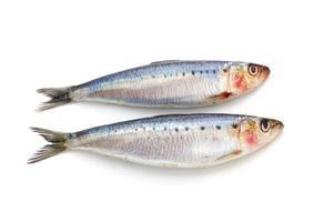 dois peixes de sardinha fresca foto