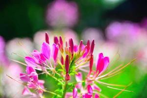 tara ocidental da flor foto