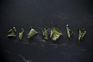 folhas de outono em fundo preto foto