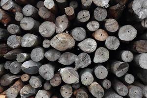 madeira de mangue para ser processada como carvão foto