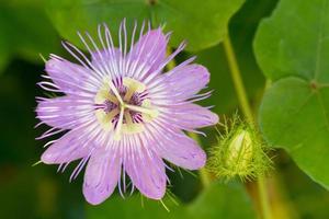vista de perfil de flor e maracujá