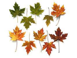 folhas de bordo foto
