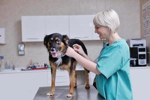 veterinário e assistente em uma clínica de pequenos animais foto
