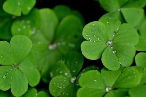 gotas em verde foto
