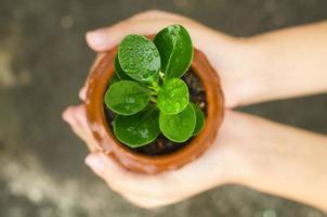 mãos segurando um rebento verde
