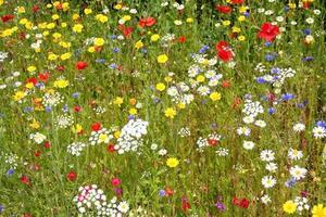flores silvestres. foto