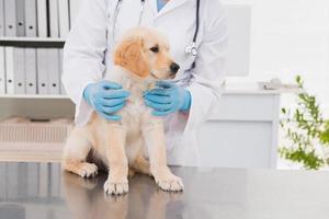 veterinário sorridente, examinando um cachorro fofo foto