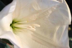 Florzinha foto