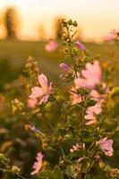 flores silvestres foto