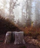 névoa da manhã em uma madeira sobre são francisco