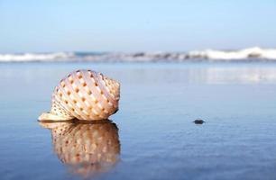 concha da praia foto
