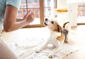 mulher sênior com seu cachorro foto