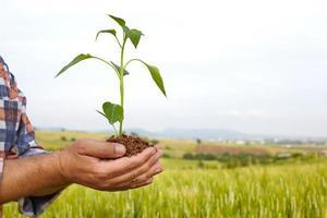mãos de homem segurando uma planta. conceito de ecologia foto
