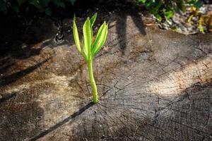 novo crescimento de árvore na árvore morta como conceito de negócio foto