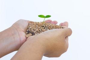 mão e planta isolado no fundo branco foto