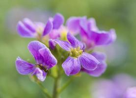 Flor roxa foto
