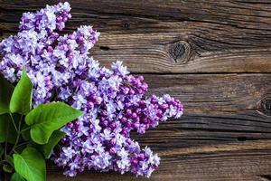 flores lilás foto