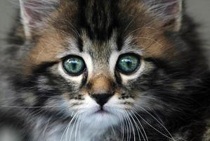 gato bebê foto