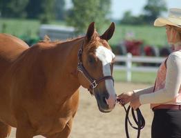 vaqueira em um show de cavalo foto