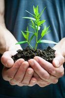 mãos humanas segurando planta verde closeup