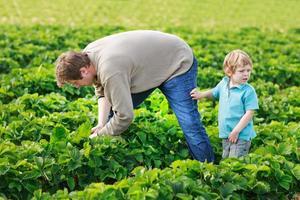 pai e filho de 3 anos na fazenda de morangos