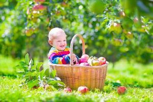 bebê em uma cesta de maçã foto