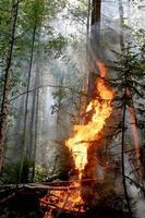 floresta de fogo foto