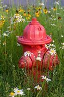 boca de incêndio entre flores silvestres foto