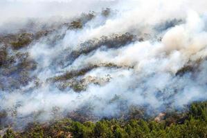 fumaça de um incêndio florestal foto