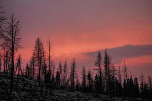 árvores nuas no pôr do sol foto