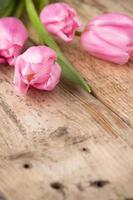 tulipa. foto