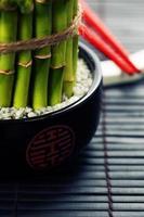 pauzinhos e uma planta de bambu da sorte foto