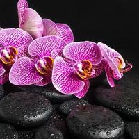 belo spa ainda vida de pedras zen com gotas foto