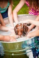 grupo de crianças dando banho de filhote de cachorro foto