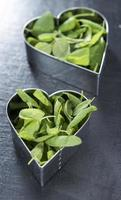 eu amo ervas frescas (conceituais) foto