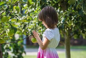 menina pegou maçã foto