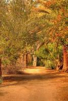 trilha na selva foto