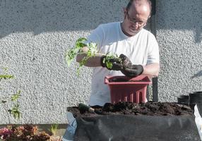 plantas de envasamento masculino caucasiano maduras foto