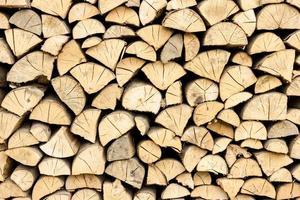 troncos de árvore na seção foto